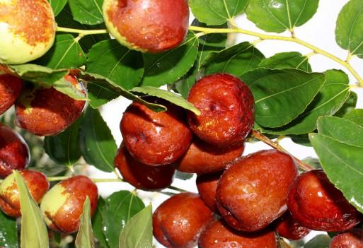 Król owoców i owoc królów – daktyle medjool