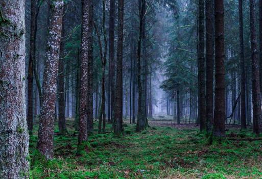 Odtruj organizm ze smogu domowymi sposobami