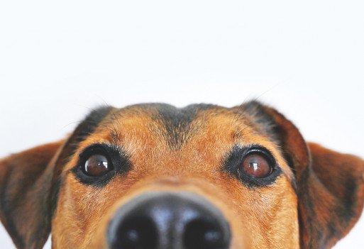 Jak pozbyć się z domu sierści i zapachu zwierząt?