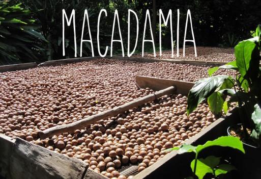 Olejek macadamia. Zabójca cellulitu i rozstępów